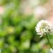 病気や環境を言い訳にしない:大野更紗さん
